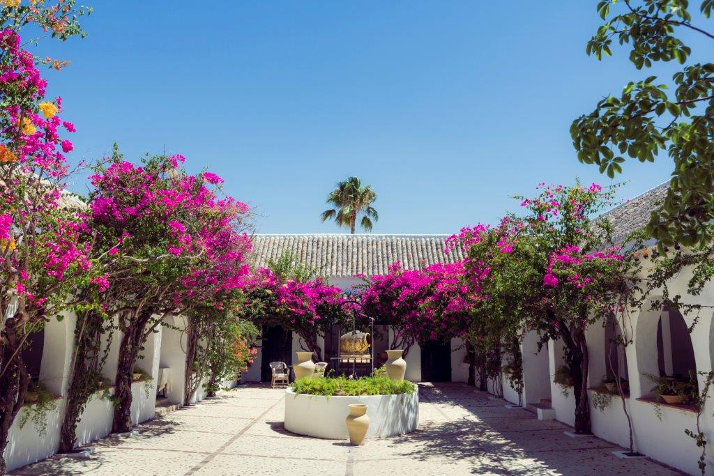 Hacienda de San Rafael Andrew Forbes for TLE (11)